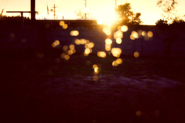 February 10, 2010: backyard bokeh