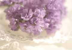 Lavender and Lace (luvpublishing) Tags: flowers white texture nature floral purple lace lavender overlay picnik layered statice sealavender explored limoniumsinuatum