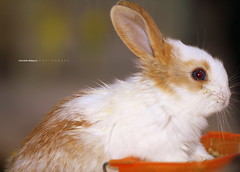 Bunny (Gothic Crow) Tags: rabbit bunny animal kuneho