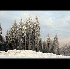 Winter (motivsucher) Tags: schnee winter snow cold hoarfrost kalt raureif niedersfeld
