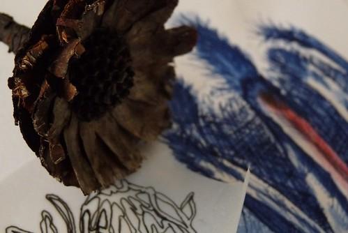 sketching protea
