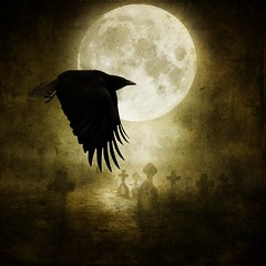 The Raven (~Brenda-Starr~) Tags: moon bird texture cemetery graveyard silhouette night photomanipulation photoshop headstones raven textured featheryfriday brendastarr may2011
