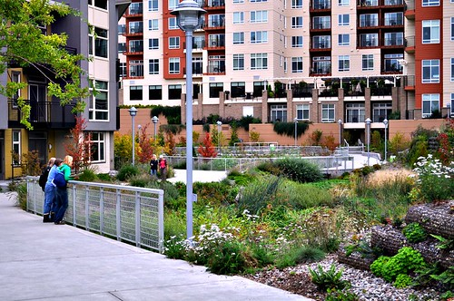 Thornton Creek water channel, with Thornton Place & Aljoya developments in background (by: SvR Design)