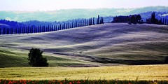 Otherwordly Valdorcia | Una Valdorcia dell'altro Mondo | Val D'Orcia (! .  Angela Lobefaro . !) Tags: road italien sky italy panorama house tree field grass landscape spiky gold golden countryside scenery italia nuvole postcard horizon country curves dream feld himmel landmark unesco worldheritagesite bleu textures campagna ciel cielo tuscany soul nubes poppies lone cypress siena 135 pienza om curve toscana nuages anima valdorcia toscane dreamer magical ubuntu zuiko f28 paesaggio allrightsreserved cartolina burg italians daydreaming toskana casale curva sinuous herebedragons italianlandscape cipressi digikam otherwordly sinuosity holidaysvacanzeurlaub sinuosit maxgreco angelamlobefaro tuscanity searchthebestnew