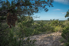 North Spur View Point - Government Canyon State Natural Area - Bexar County - Texas - 11 September 2016 (goatlockerguns) Tags: live oak government canyon state natural area bexar county texas nature park statepark trees tree forest hillcountry usa unitedstatesofamerica south southern southwest west