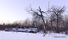 End of the Run (/ shadows and light) Tags: armstrong manitoba 1963chevroletbiscayne chevy gm generalmotors abandoned automobiles beaters bluehour car clunkers cold countryside decay decayed decaying derelict old ruralexploration rurex snow transport transportation trees twilight vehicles winter