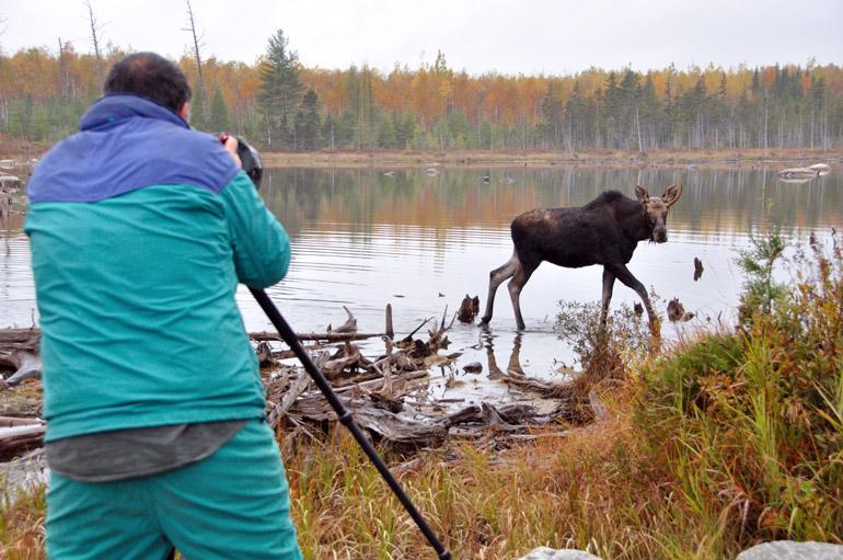 moose_photog_0159