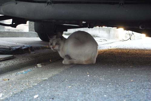 Today's Cat@20091104