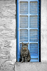 (CromagnondePeyrignac) Tags: blue france window cat chat dordogne fenetre perigord supershot impressedbeauty updatecollection