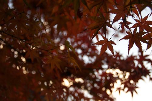 WordBench 写真部 - 第二回栃木県那須烏山市