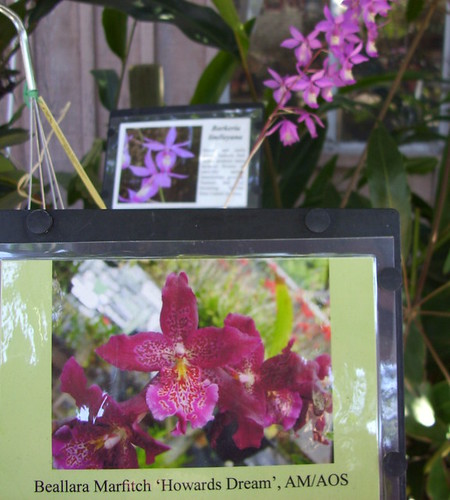orchid info