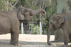 Big Elephant, Small Elephant