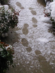 Footprints by Pushmi-Pullyu? (tcpix) Tags: snow virginia footprints