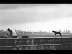 Mumbai 2 (jatin81) Tags: dog strange romance mumbai engrossed justlooking constraints