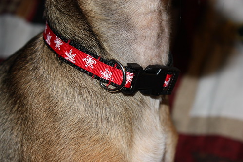 printed-dog-collars