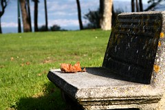 El fin del otoo / The end of autumn (Cesar Redondo) Tags: otoo autumn autumnleaves hojasdeotoo bosque herbst automne autonno  outono parque park samil playadesamil samilvigo vigo pontevedra galicia espaa spain paisaje paisajes landscape autumnlandscapes paisajesotoales nature naturaleza canon canon1000d beachofsamil color colores colour garden gardens leaves leave stonebenches bancosdepiedra diciembre december december09 dec09 dec18 dic18