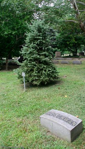 Schwan Christmas tree