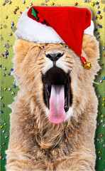 Too tired for Christmas! (Tambako the Jaguar) Tags: santa christmas red wild cute male hat feast cat photoshop zoo cub switzerland big nikon feline holidays leo zurich lion young kitty fluffy celebration photomontage merry zrich yawning lwe d300 panthera pantheraleo