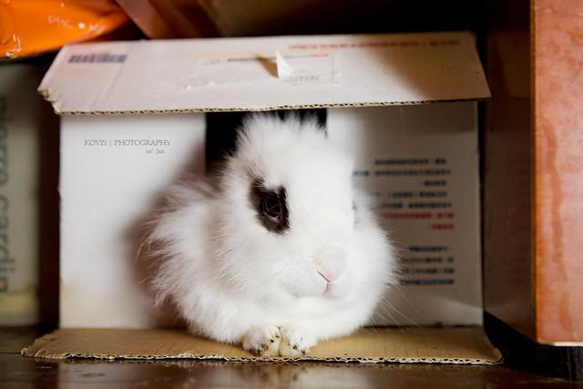 紙箱兔 / rabbit in a box...