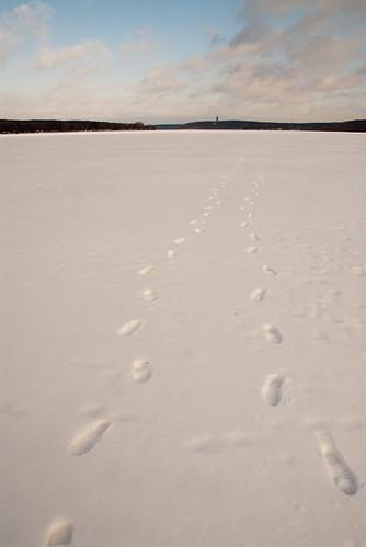 Spuren auf dem Eis