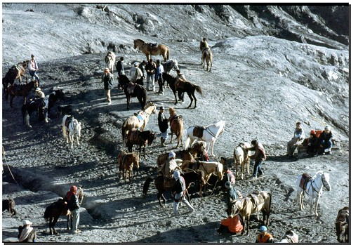 """A cavallo sul Bromo • <a style=""""font-size:0.8em;"""" href=""""http://www.flickr.com/photos/49106436@N00/4329672701/"""" target=""""_blank"""">View on Flickr</a>"""