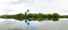 _JMP5259 - _JMP5270 (JMP.Images) Tags: sky cloud reflection tree water pond nikon coconut pano palm jmp d300 jmphotography jonathanmurphy jontechx