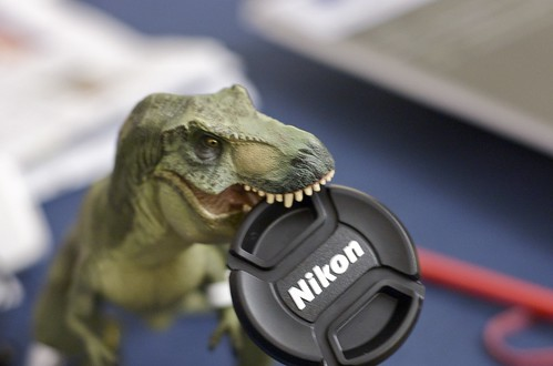T-rex enjoying lens cap