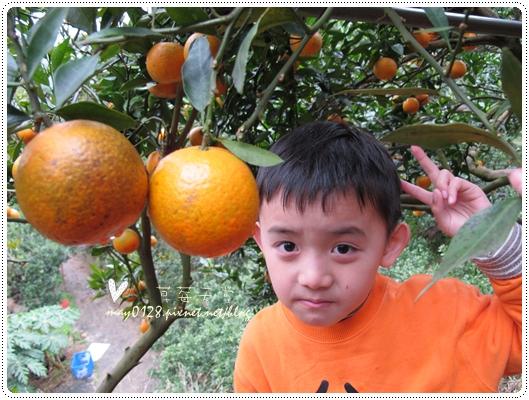 關西採草莓橘子牛欄河2010.02.20-39