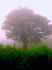 en la bruma (IDIAY) Tags: misty costarica selva rbol neblina bruma viajealvolcanarenal llanurasdesancarlos