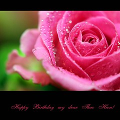 Happy Birthday, my dear Thao Hien! (JannaPham) Tags: life birthday morning pink flower macro green dedication rose canon garden happy eos golden spring pretty friendship bokeh happiness 5d markii thaohien jannapham tranthaohien