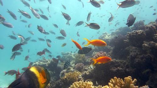 Underwater in Egypt