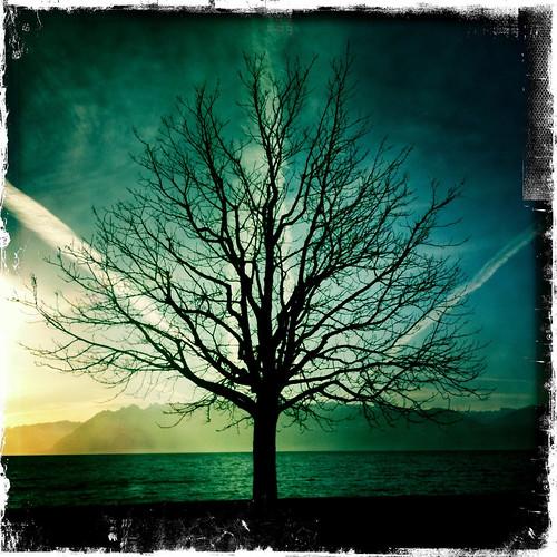 Tree in February