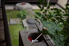 (kisyu) Tags: park grass japan night kyoto view image pentax buddha great buddhism burning daibutsu nara  k10d