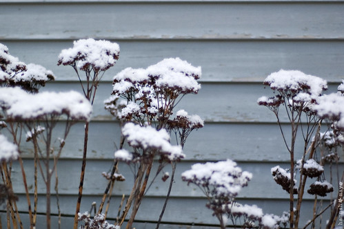 winter beauty, no.5