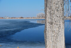 Ice Edge (Let Ideas Compete) Tags: usa lake tree ice frozen colorado lafayette bark co essence 80026 lafayettecolorado waneka lafayetteco lafayettecoloradolafayettecoloradolafayette colafayetteco