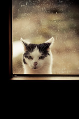 Not a window licker (flaimo) Tags: window cat outside ventana eos austria sterreich kat chat fenster 100mm finestra gato janela stains katze taches   gatto fentre glas obersterreich  flecken venster upperaustria   manchas    vlekken  macchie     catmoments 5dmarkii