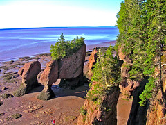 The Hopewell Rocks - The Bay of Fundy, Hopewell, New Brunswick, near Moncton (Moncton Photographer) Tags: flower face landscape bay high nikon rocks tide low pot moncton fundy hopewell the