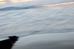 bliss (nosha) Tags: ocean blue sea usa dog black nature beautiful beauty march newjersey grove bokeh nj f90 monmouth monmouthcounty ff 2010 lightroom oceangrove blackmagic 160sec 48mm nosha 18200mmf3556 nikond300 160secatf90