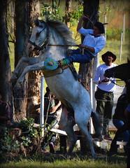 El overo azulejo (Eduardo Amorim) Tags: gaucho gauchos gaúcho gaúchos cavalos caballos horses chevaux cavalli pferde caballo horse cheval cavallo pferd cavalo cavall 馬 حصان 马 лошадь crioulo criollo crioulos criollos cavalocrioulo cavaloscrioulos caballocriollo caballoscriollos castillos rocha uruguay uruguai sudamérica südamerika suramérica américadosul southamerica amériquedusud americameridionale américadelsur americadelsud eduardoamorim