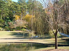 Little Lake (melisabates) Tags: nc dukegardens fall09