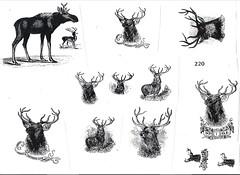 High quality reindeer clipart (David Wieland) Tags: white black reindeer clipart