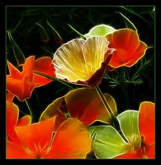 Fractalius california poppies. (sandra.harris10) Tags: legacy awardtree miasbest magicunicornverybest selectbestfavorites selectbestexcellence magicunicornmasterpiece sbfmasterpiece