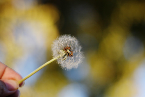 .make a wish-keh.