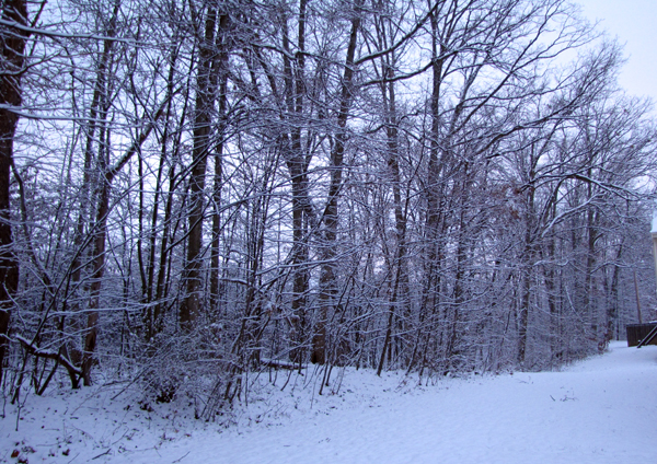 12-5-09 snow1