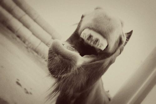 horsefunny2