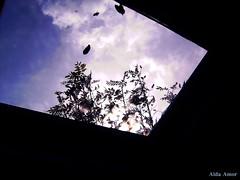 I want a window to take me to sky. (Aida Amor) Tags: blue trees sky black window glass leaves azul backlight clouds contraluz hojas ventana rboles negro cielo nubes cristal