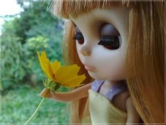 (Joy Ana) Tags: bigeyes radiance blythe takara jewel rbl guarapuavapr primadollyaubrena pd3au joywichinoski