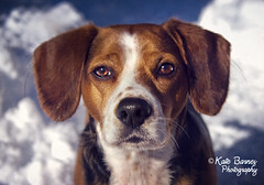 Joey (KateB.) Tags: winter dog snow cute beagle eyes awwwww hessostinkincute