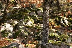 Ruta Pista Heidi (Jesu dAlange) Tags: espaa ruta canon heidi eos spain otoo cceres pista 2009 senderismo norte extremadura caceres hervs hervas peasblancas 400d jesuloca pistaheidi otoomgico