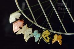 Butterflies (LynnInSingapore) Tags: food butterfly dessert wire gumpaste sugarpaste shimmerdust
